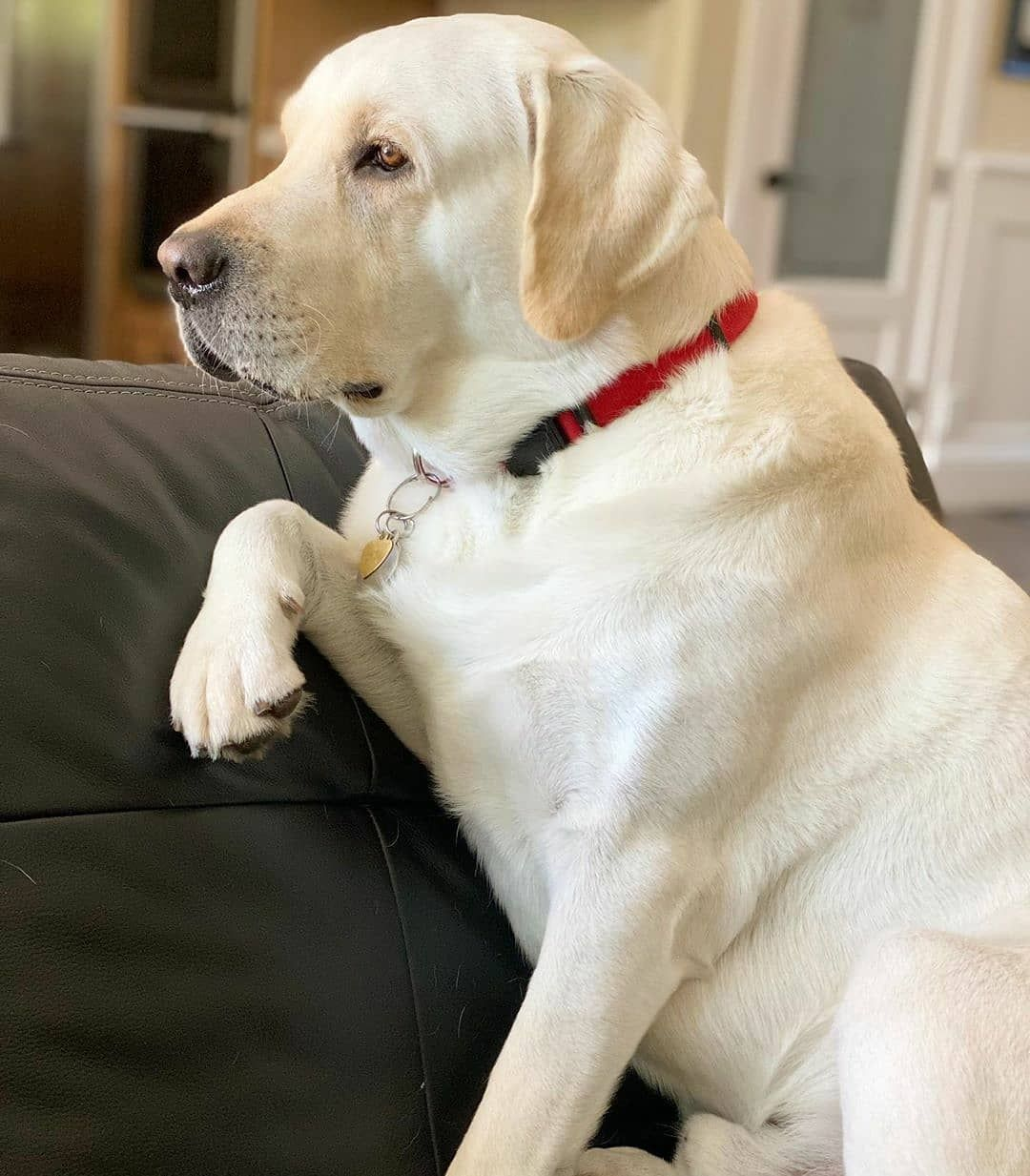 Clickthepicture To See A Girl With A Disability Has The Most Adorable Dog Ever 17 Pics In 2020 Cute Dogs Lab Dogs Dogs
