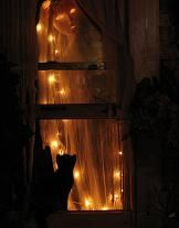 ghost-in-window-with-cat