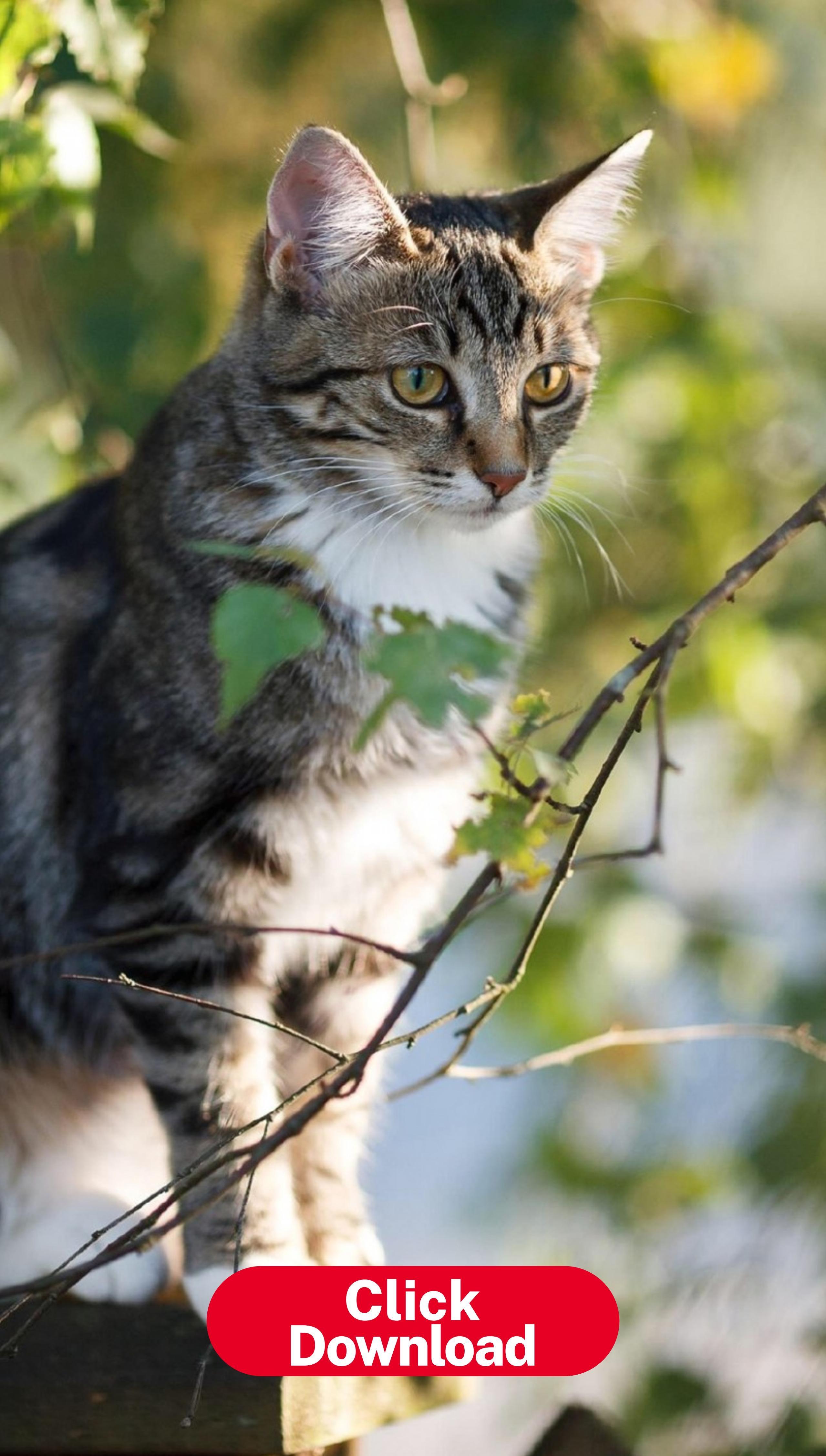 Pin On Phone Wallpaper Fondos De Pantalla De Gatos Gato Bonito Hermosa Fotografía