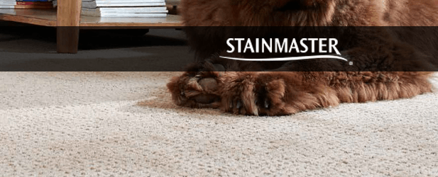 Stainmaster PetProtect Carpet Review Carpet reviews