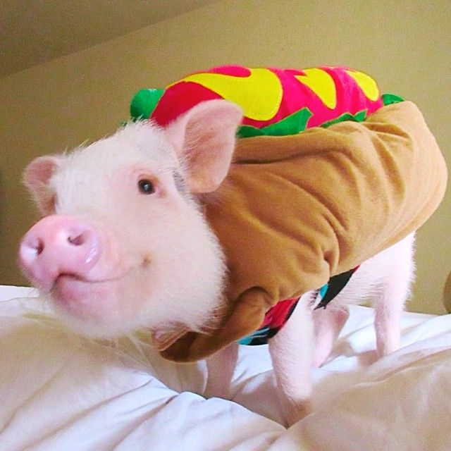 Hot Dog Piglet (Hamlet)