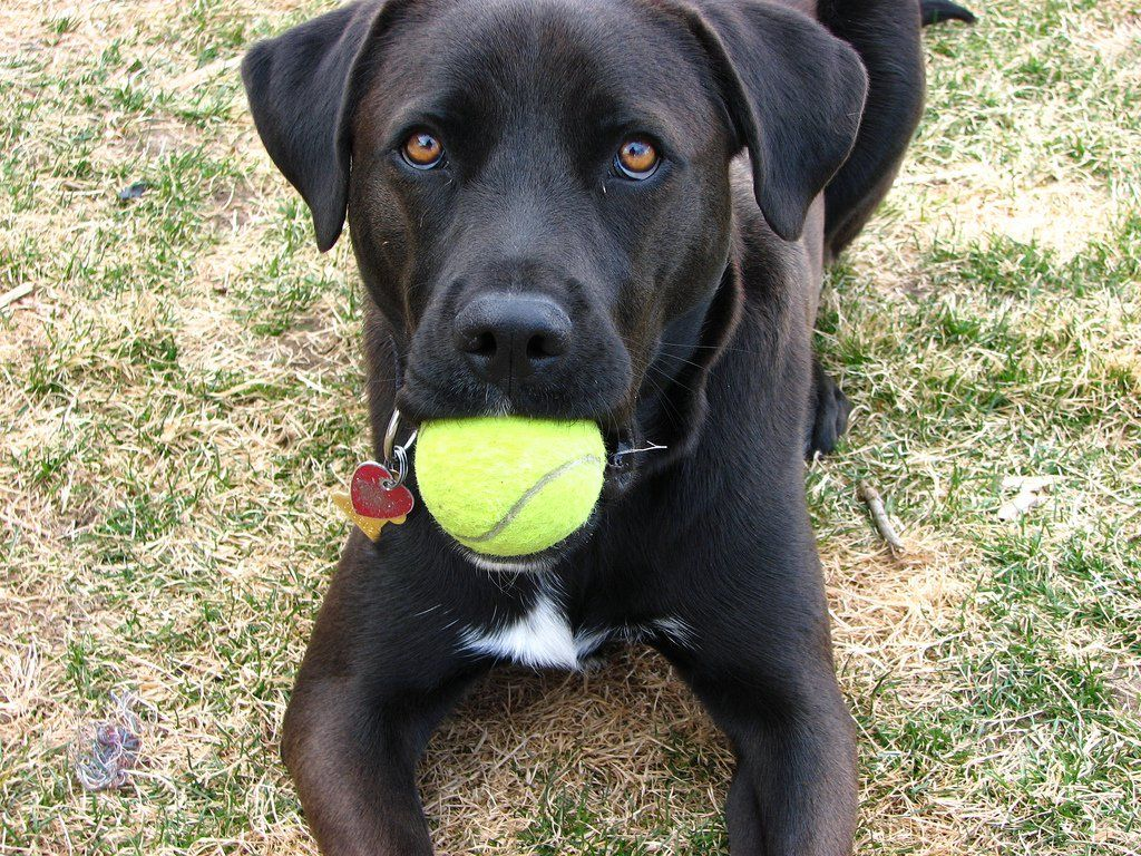 Dog Fetch Training How To Get Your Dog To Bring Something Back To