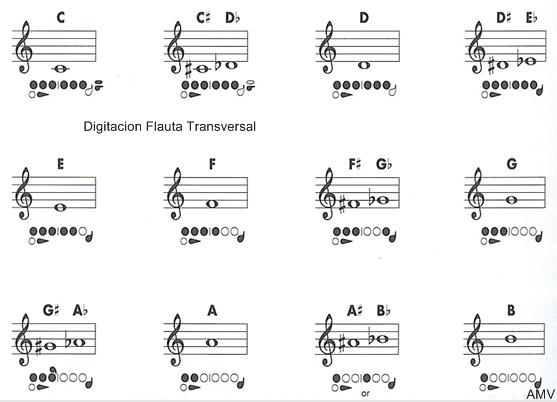 Resultado de imagen para posicion si bemol flauta traversa