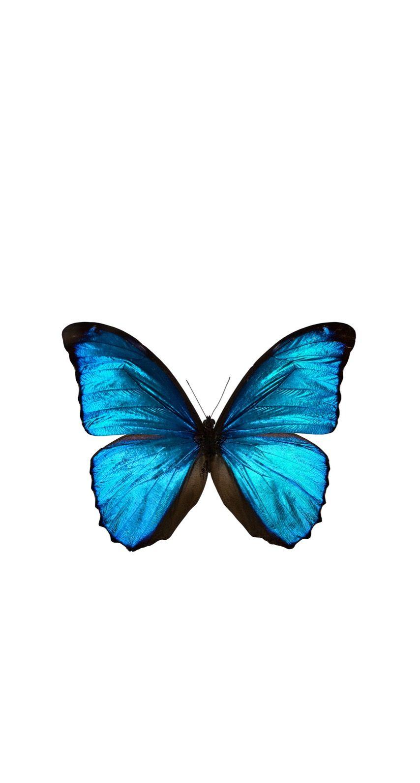 pin by isamar batsta on wallpapers blue butterfly