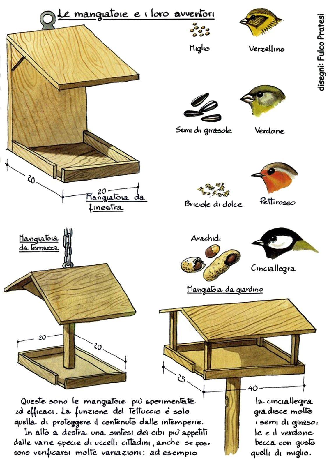 Gestione Mangiatoia Uccelli Cerca Con Google Scienze Pinterest