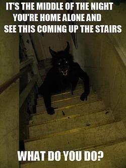 funny halloween prank werewolf - Funny Halloween Prank