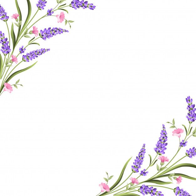 Elegant Card With Lavender Flowers Prem Premium Vector Freepik Vector Flower Frame Wedding Flora In 2020 Flower Drawing Flower Backgrounds Lavender Flowers
