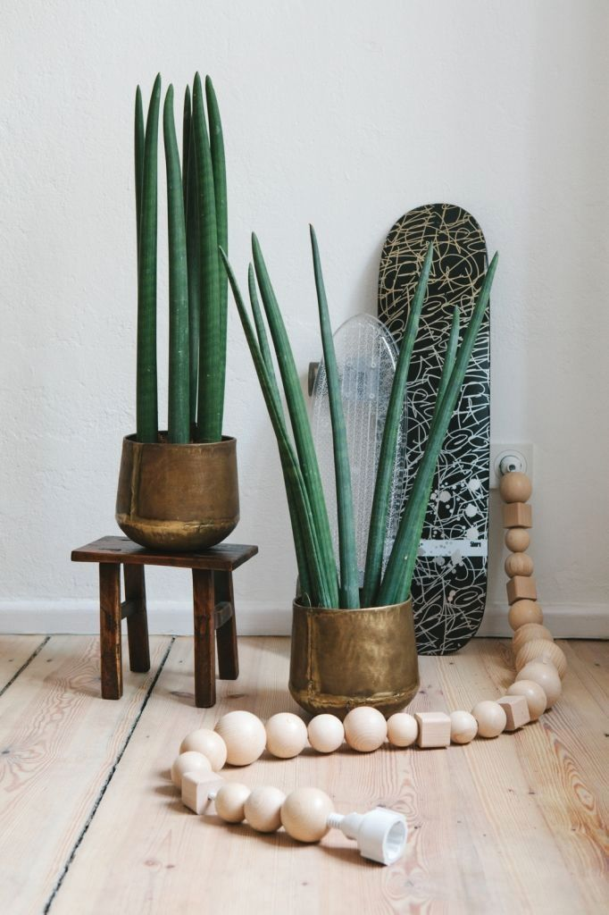 interior design plants inside house pictures decor pinterest and also rh