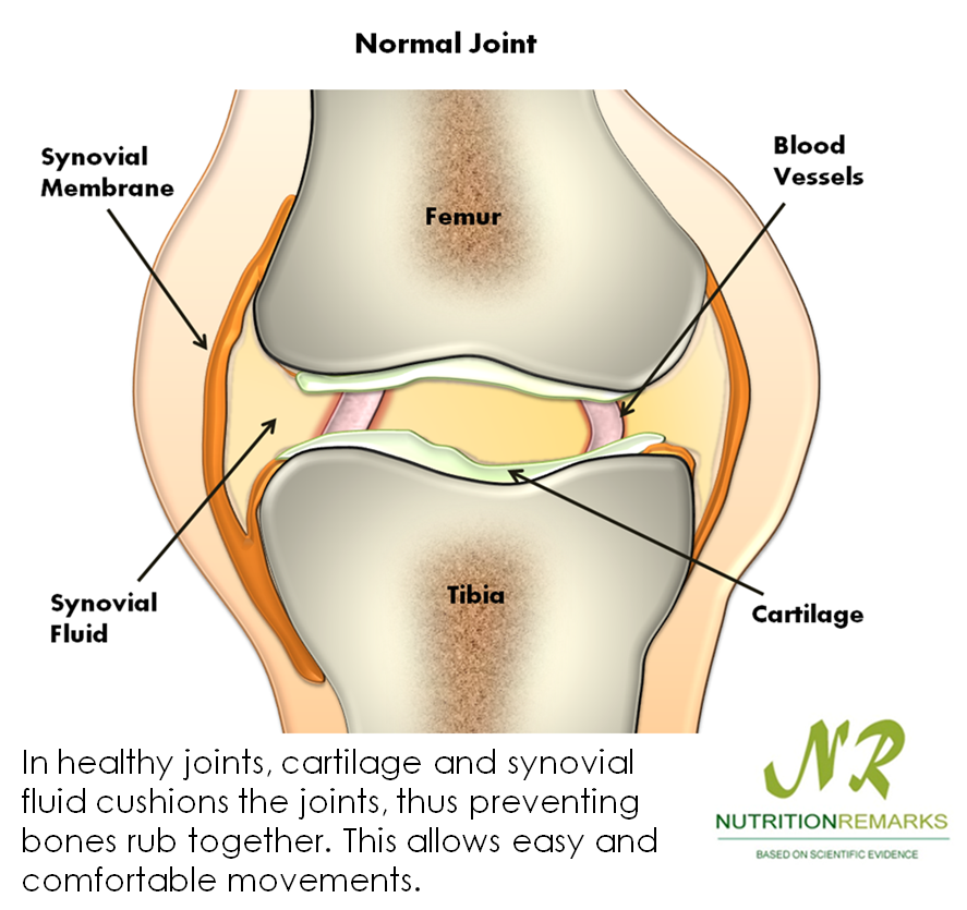 synovial fluid and friction A synovial joint is characterised by the presence of a fluid-filled joint cavity contained within a fibrous capsule it is the most common type of joint found in the human body, and contains several structures which are not seen in fibrous or cartilaginous joints.