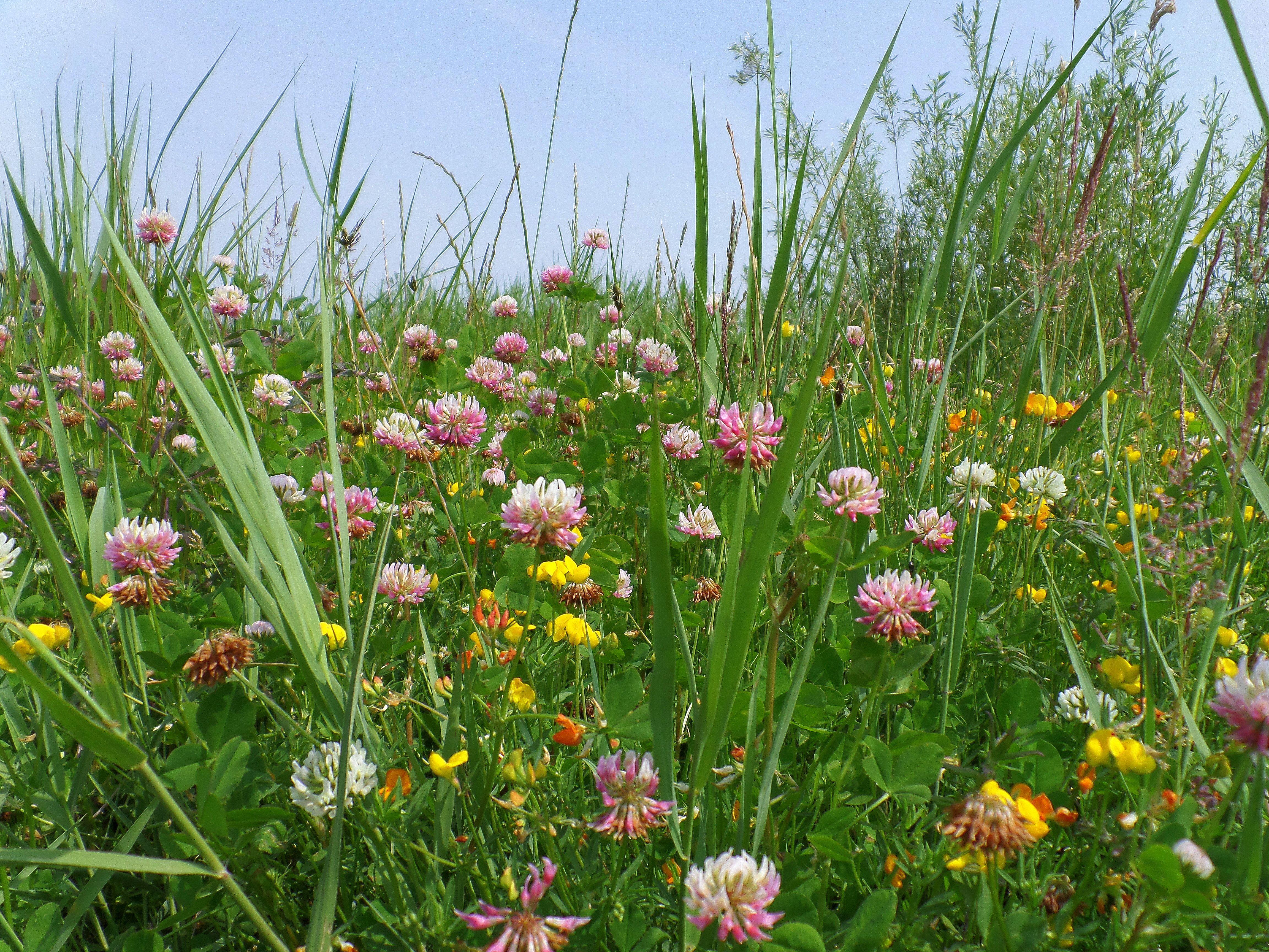 Wildbloemen