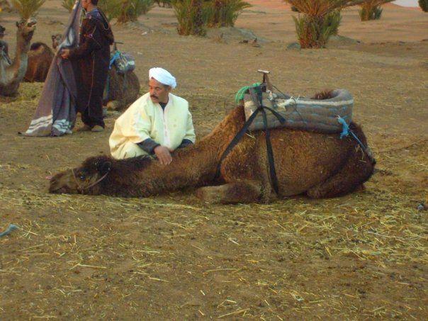 Sahara+Desert+Animals+and+Plants   desert3