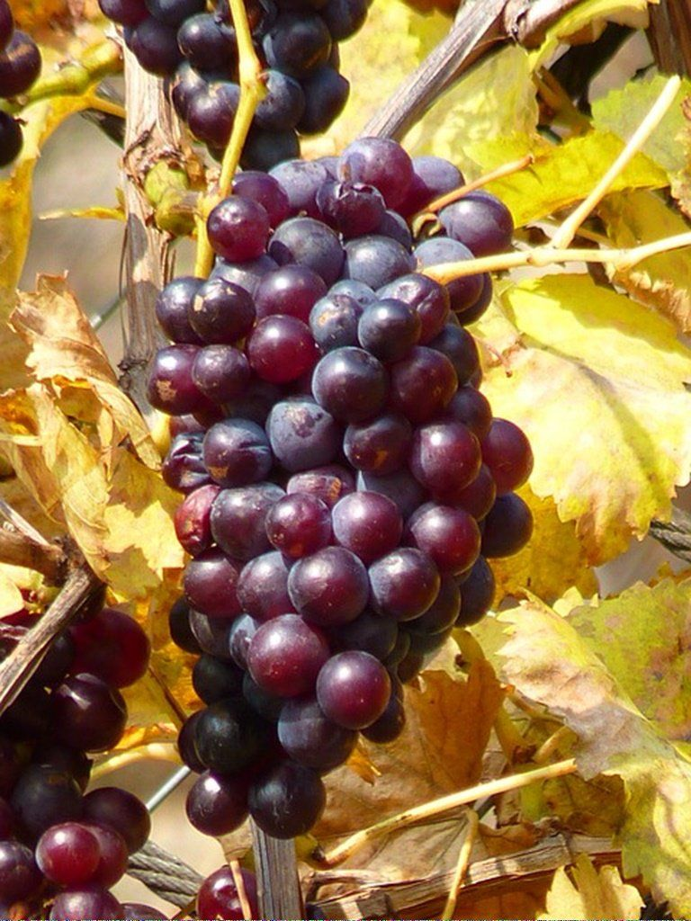 Shipping Wine To Maryland InexpensiveWineStorage Product