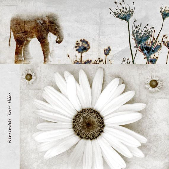 Fine Art Elephant Print Remember Your Bliss Giclee Print by GalleryZooArt, Catherine Jeltes on Etsy $30.00 https://www.etsy.com/listing/102506686/fine-art-elephant-print-remember-your?ref=shop_home_active_8