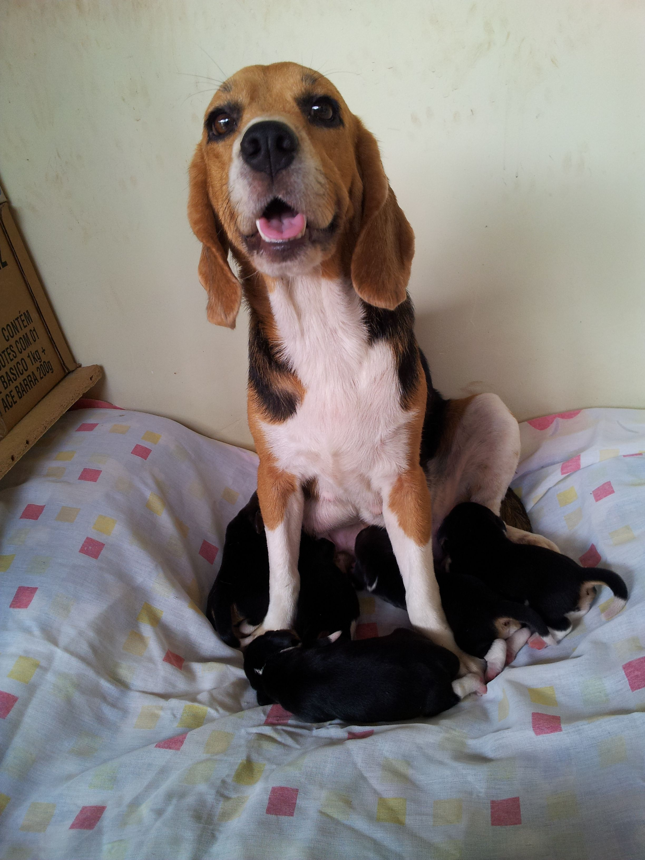 Fiona e os filhotes