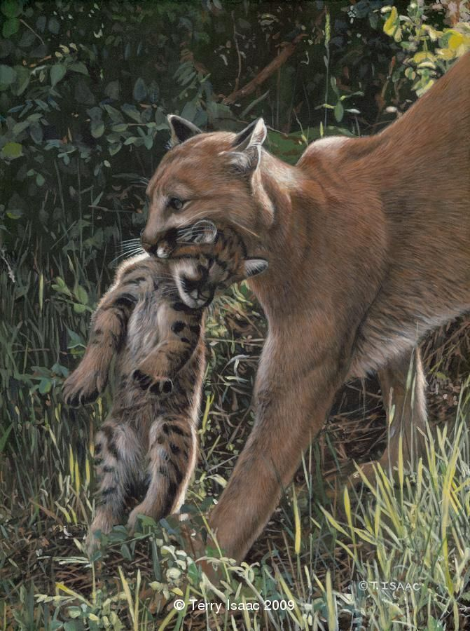 Portfolio Big cats art, Wildlife paintings, Wildlife artists