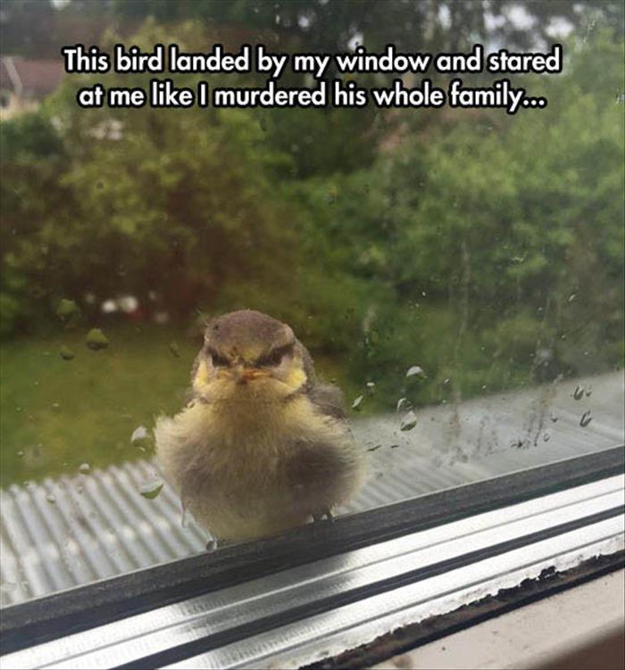 24 Animals Humor memes #hilariousanimals