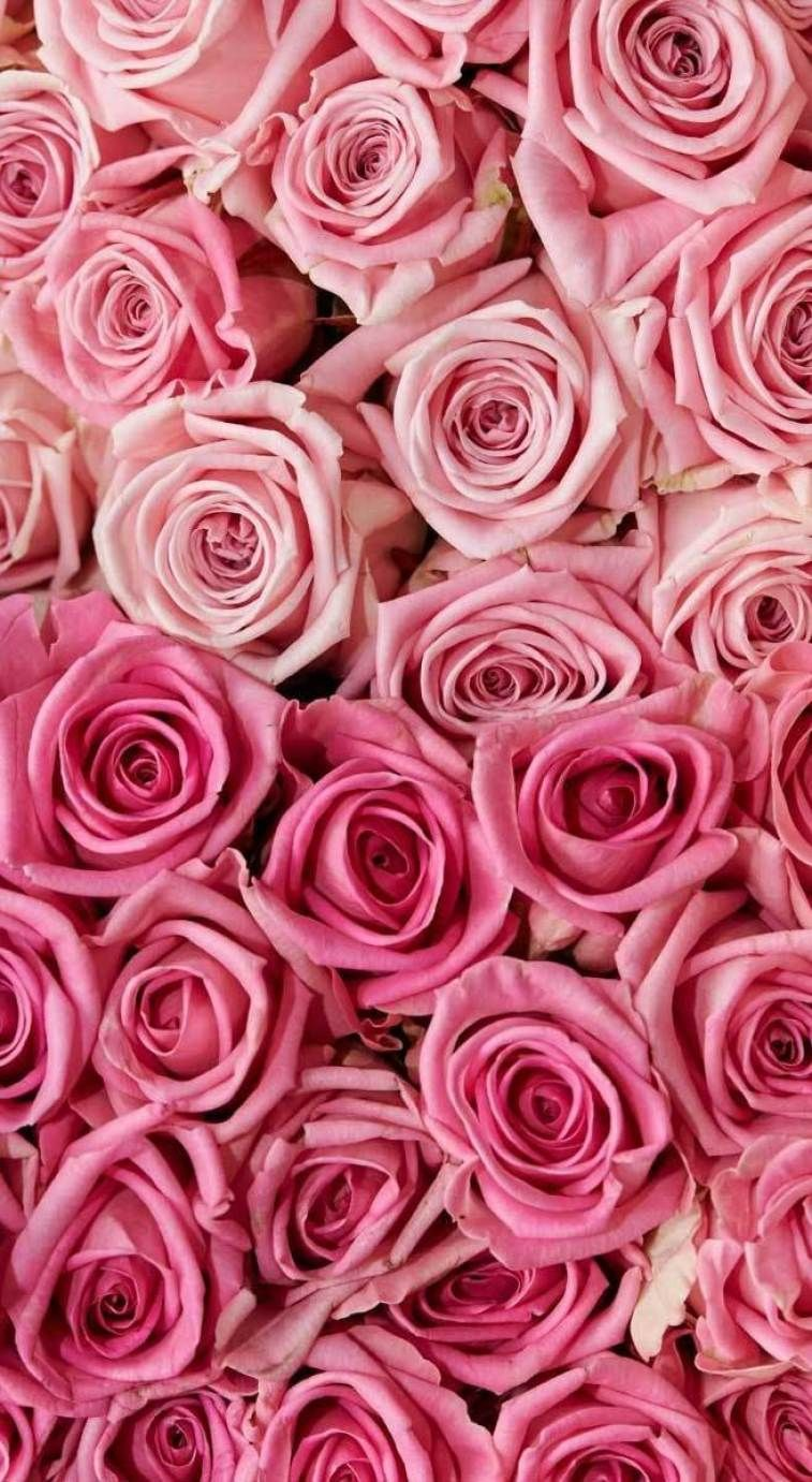 27 Very Pretty Iphone Xr Wallpapers That Will Jazz Your Phone Up Iphone Wallpaper Iphon Floral Wallpaper Iphone Pink Wallpaper Iphone Flower Phone Wallpaper