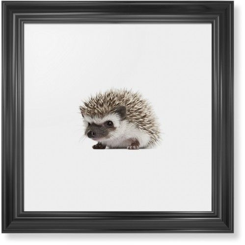 Baby Hedgehog Framed Print, Black, Classic, None, White, Single piece, 16 x 16 inches