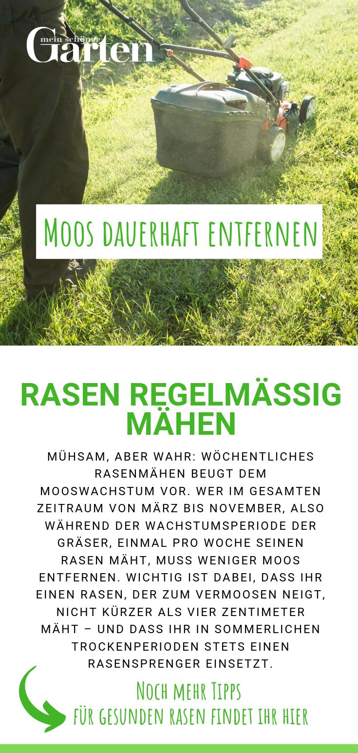 Moos Dauerhaft Entfernen So Wird Ihr Rasen Wieder Schon Rasen Moos Rasen Entfernen