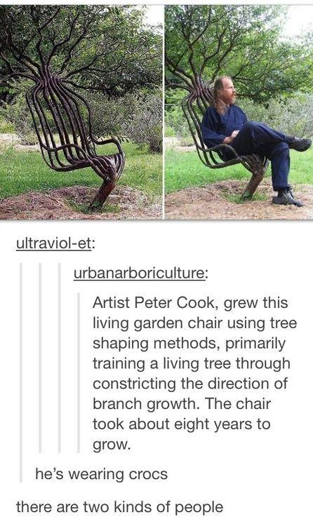 weird tree chair | Unbelievable | Pinterest | Weird trees ...