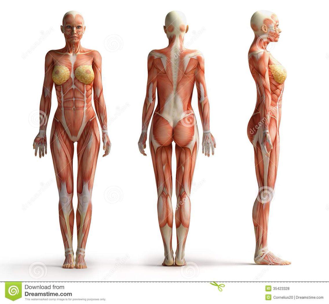 Pin By Lyuboslava Peruhova On Body Project Pinterest Anatomy
