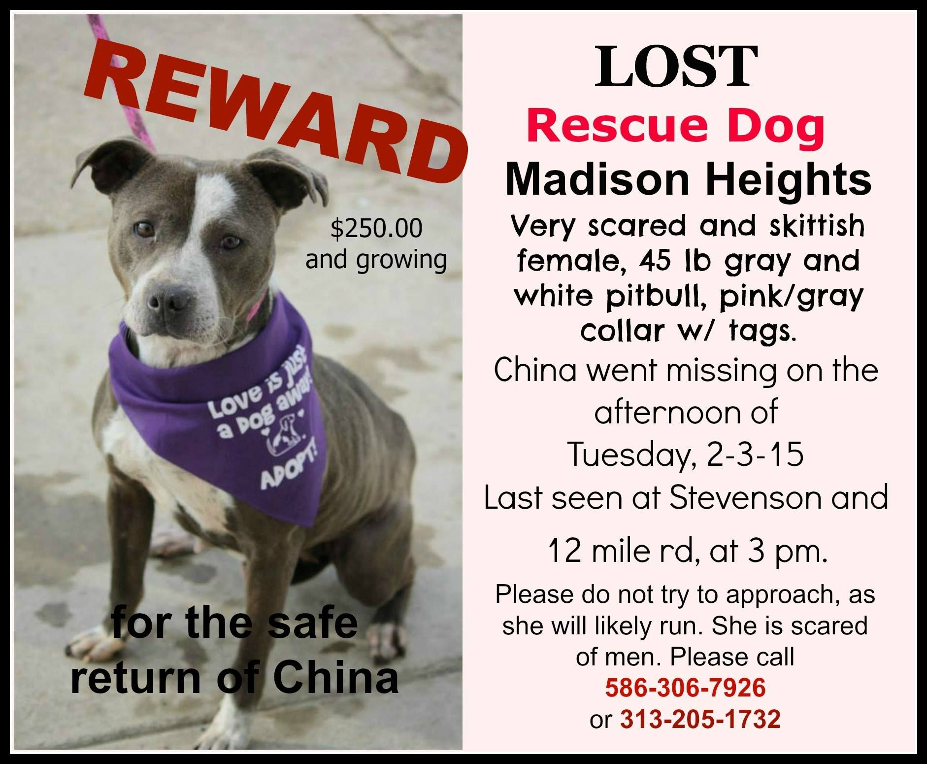 Finding China A Missing Scared And Frightened Rescue Dog