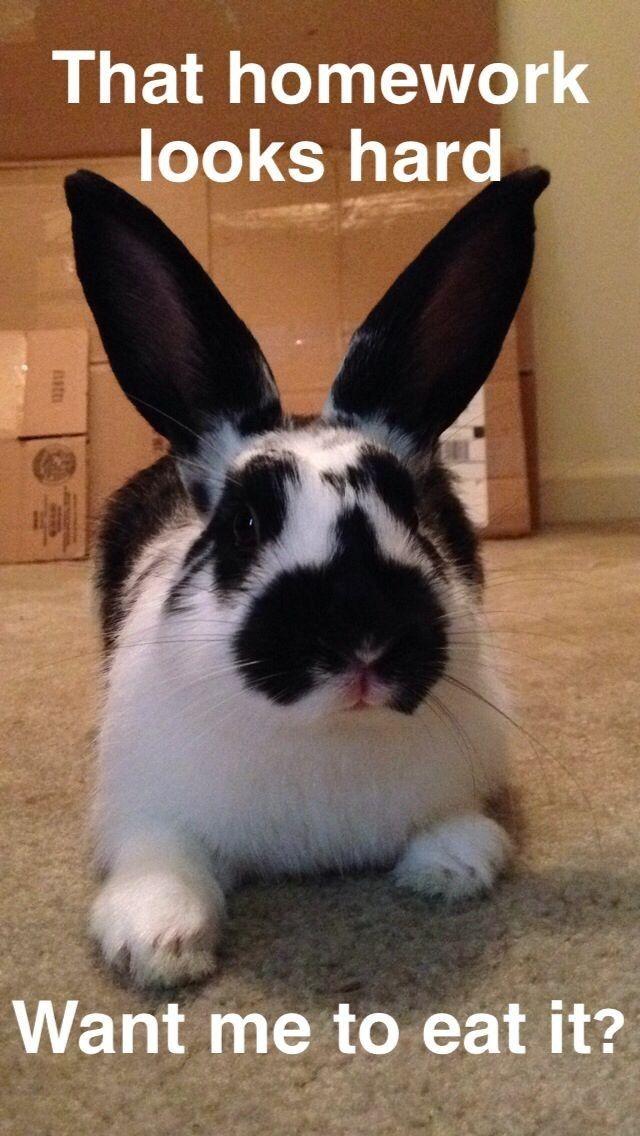 Pin by Jan Mock on Bunnie | Funny bunnies, Cute bunny, Bunny ...