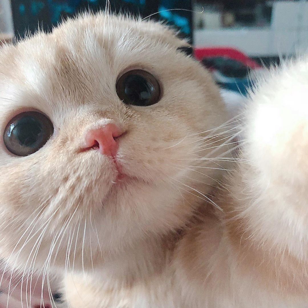 Cute Kitty Cute Baby Cats Pretty Cats Cute Cats