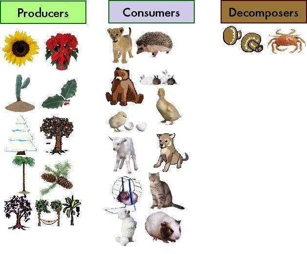 Producers Consumers and Decomposers – Producers and Consumers Worksheets