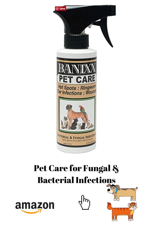 Pin on Pets World