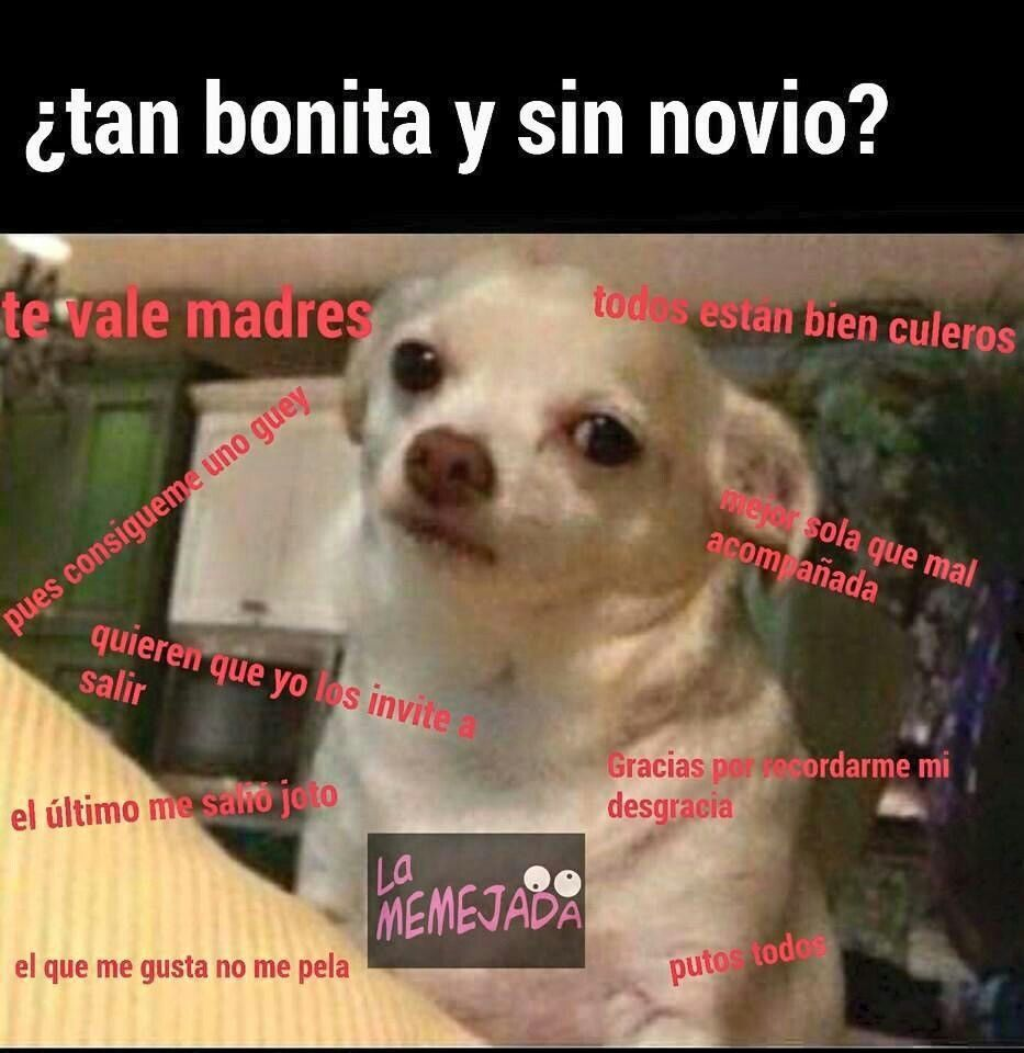 fotos de perros de puta vida memes