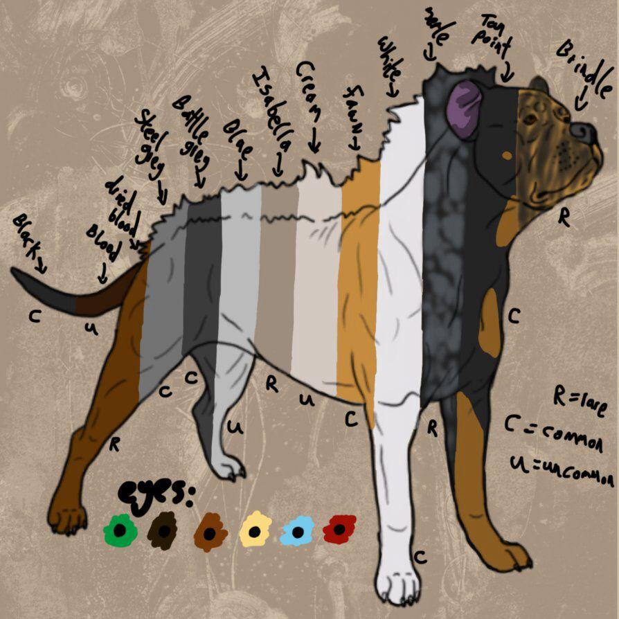 Pitbull Dog Coat Colors So Many