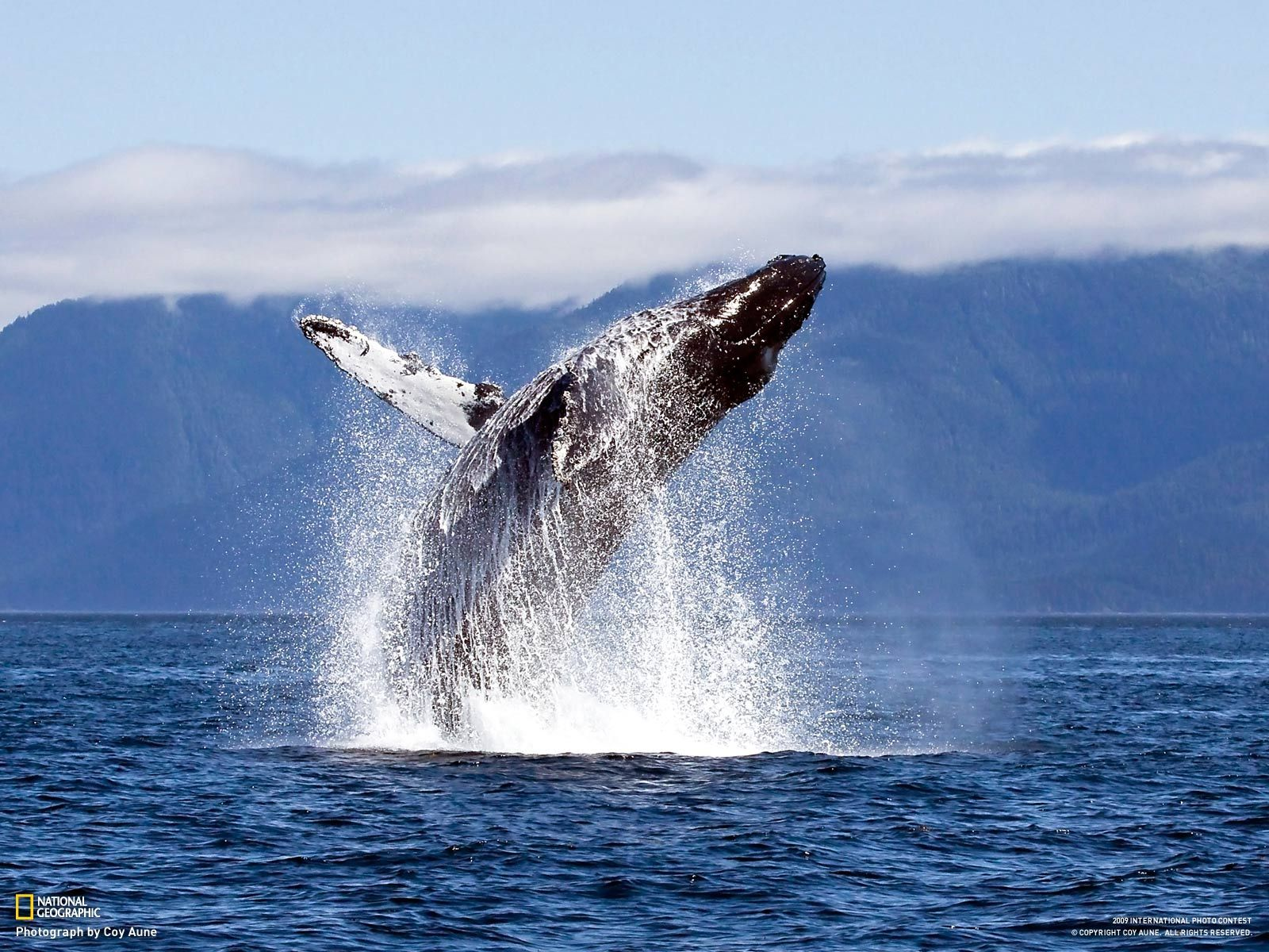Ballena nadando a su máximo explendor, enjoy you life whale!