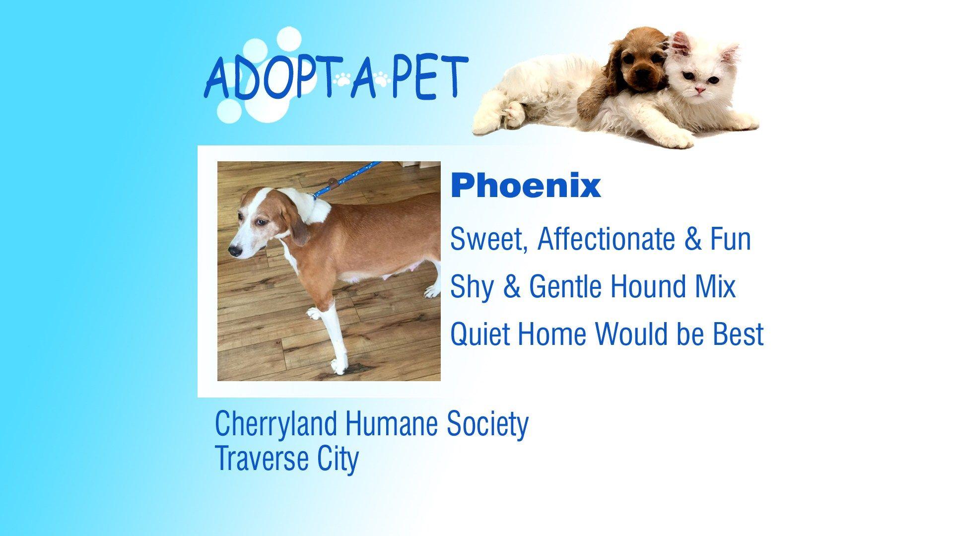 Adopt A Pet Tuesday Phoenix, Kari, Lilly Pets, Adoption