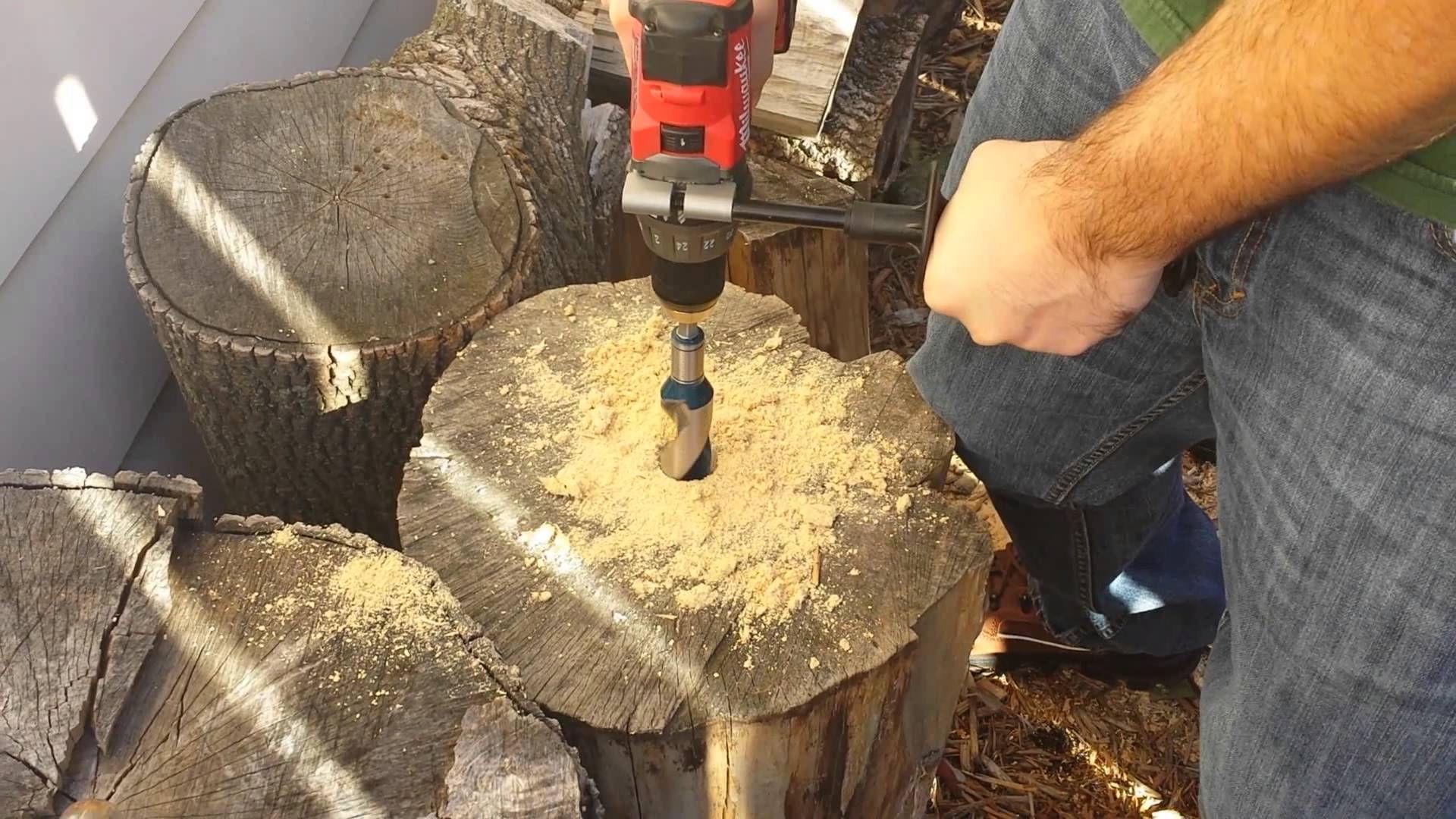 1 5 Tree Stump Holler Tree Stump Tree Stumped