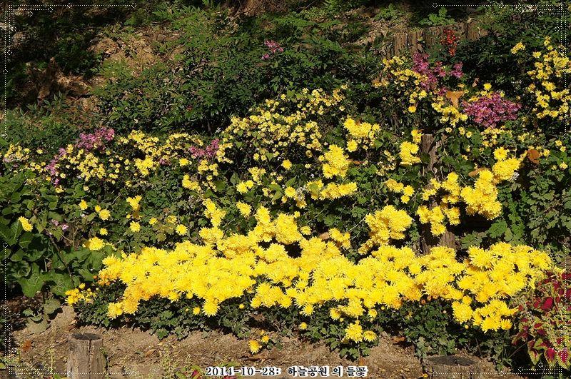 들국화와 들꽃-하늘공원