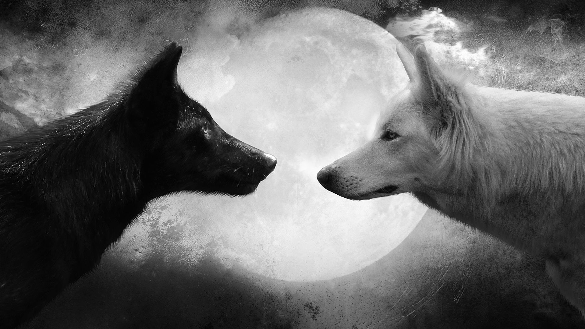 Wolf black and white animal picture image hd wallpaper