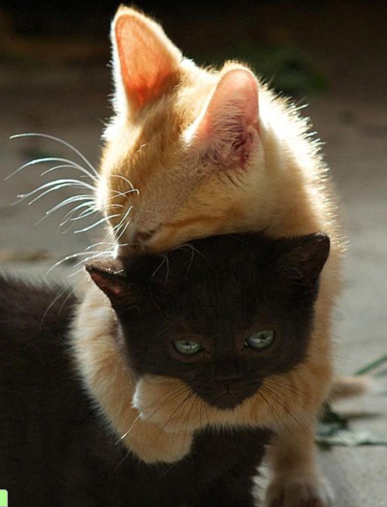 kitty hugs Cute cats, Kittens cutest, Cute animals
