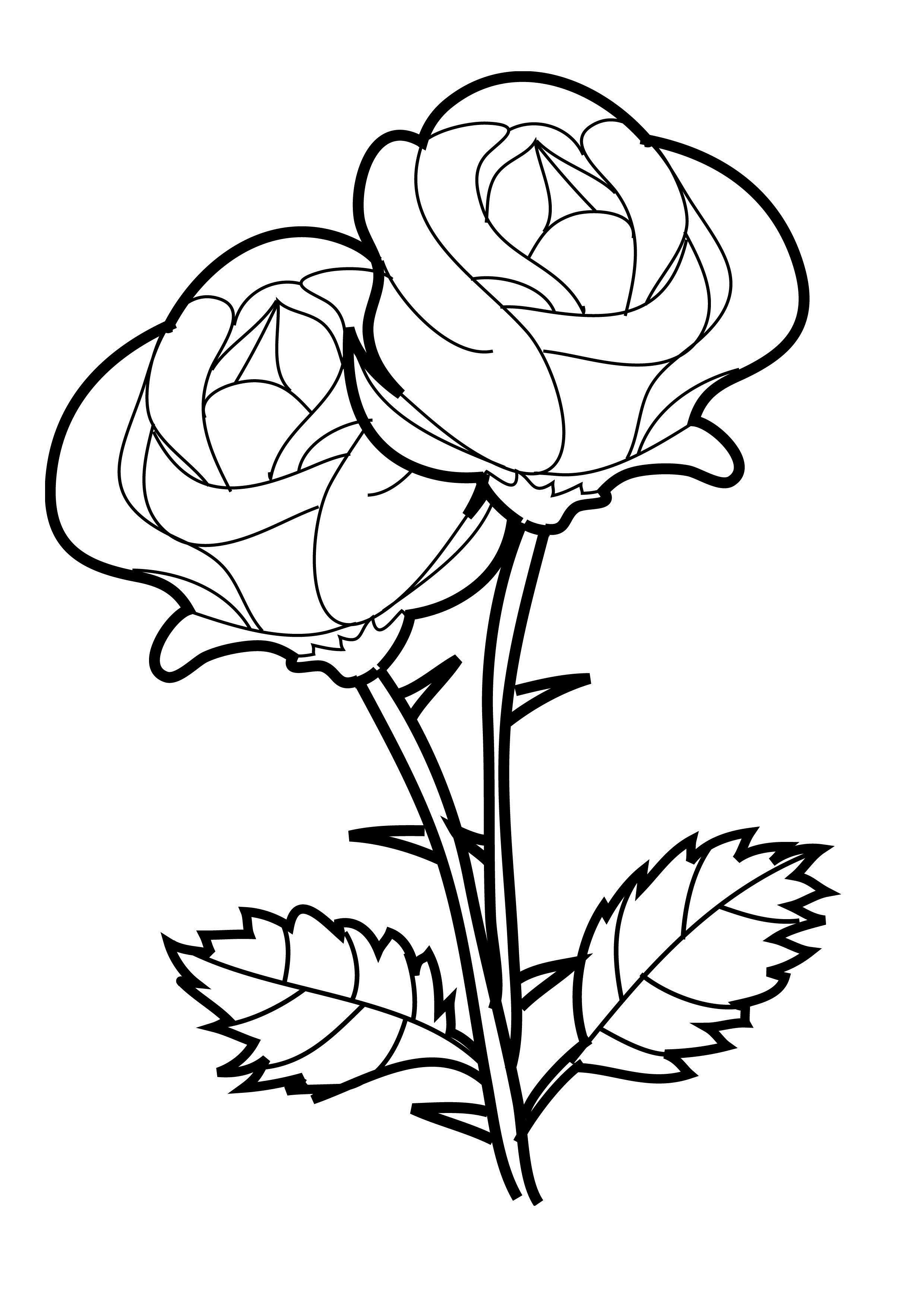 Flower Coloring Pages  Rose coloring pages, Printable flower