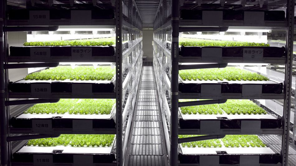 Automated Indoor Vertical Farm Will Produce 30 000 Heads 640 x 480