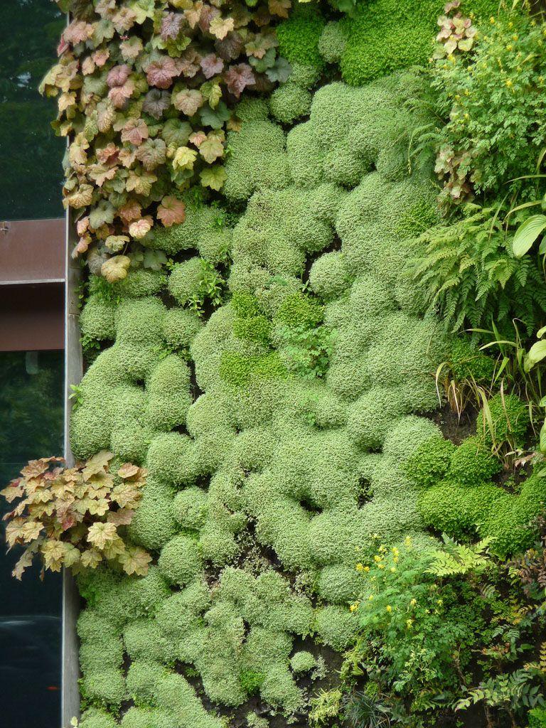 Le mur végétal du Musée du quai Branly (Paris 7e) au printemps ...