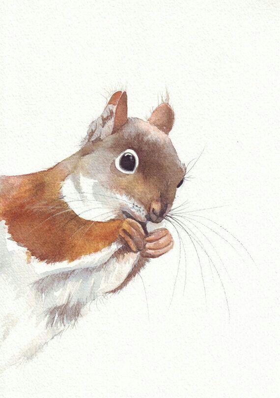 squirrel artville iv funky stuffs pinterest sch ne bilder zeichnungen und malen. Black Bedroom Furniture Sets. Home Design Ideas