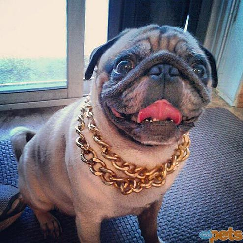 What S Up Dawg Pets Cute Animals Cute