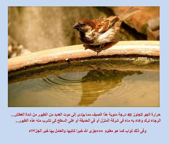 Pin By Gulizar Anwar On أدعية Places To Visit Visiting Animals