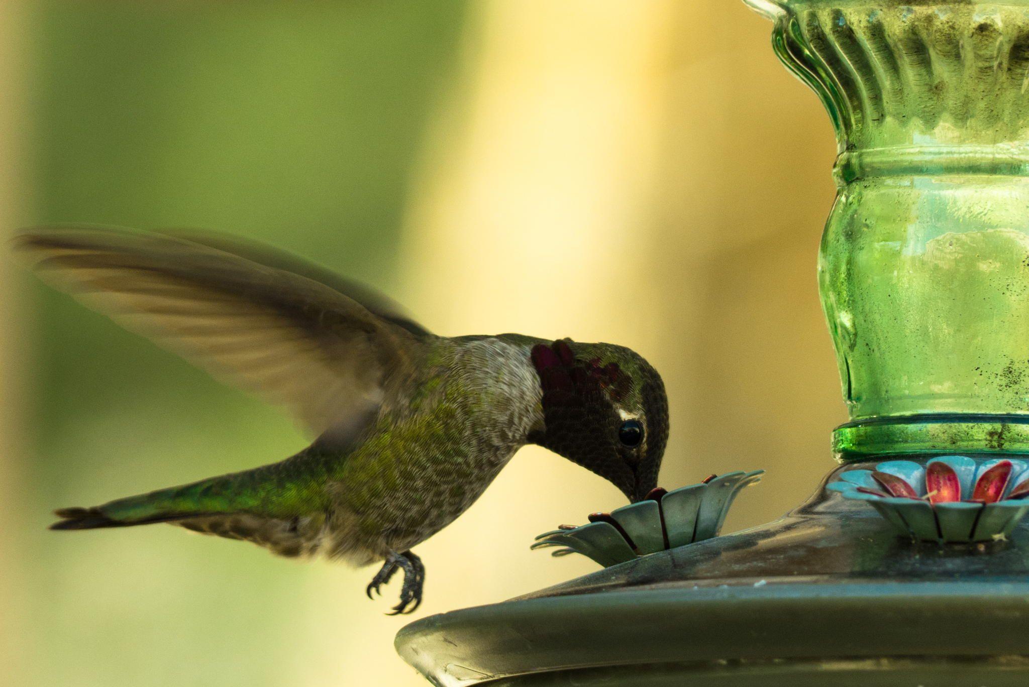 Green dreambird by Timm Hondr