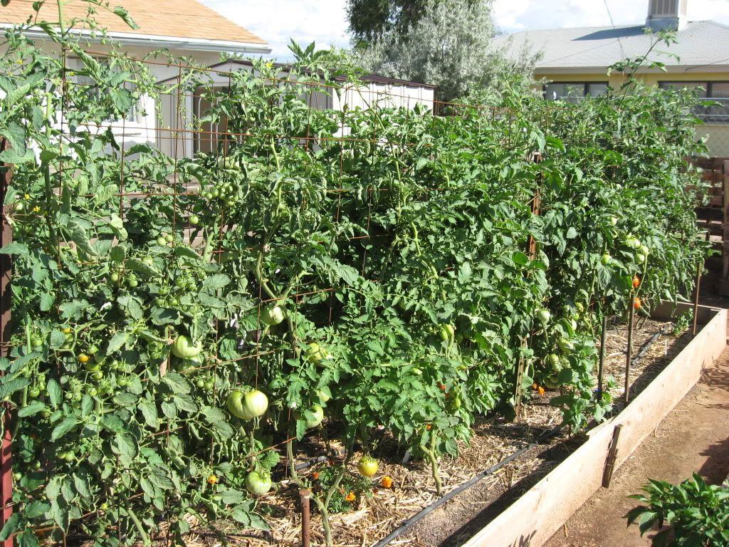 gardens minnesota midget cantaloupe google search vegetable garden ideas for minnesota