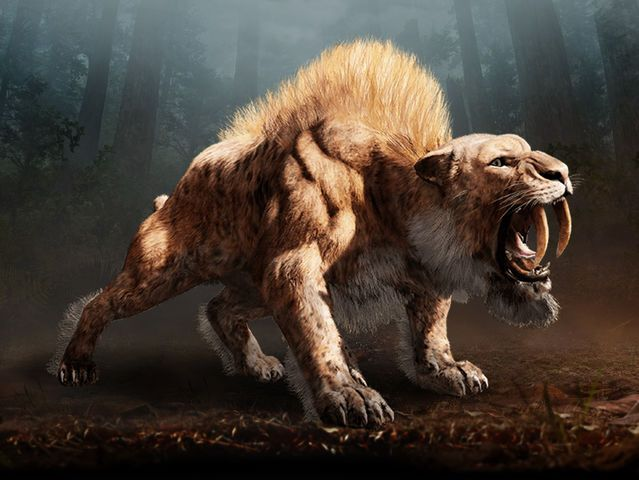 how to draw a simple saber tooth tiger