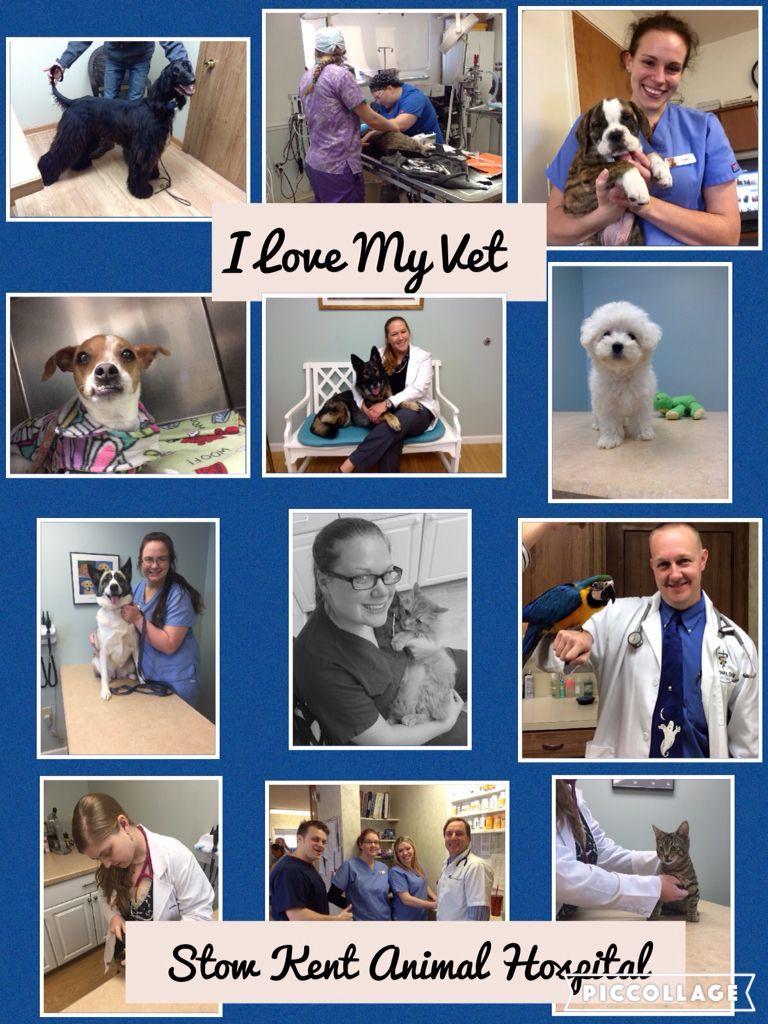 Repin If You Love Your Vet Animaldoctor Stowohio Vet Animal Hospital Pet Clinic Veterinary Hospital
