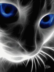 Descargar Imagnes Para Whatsapp En Movimiento Gato Imagens