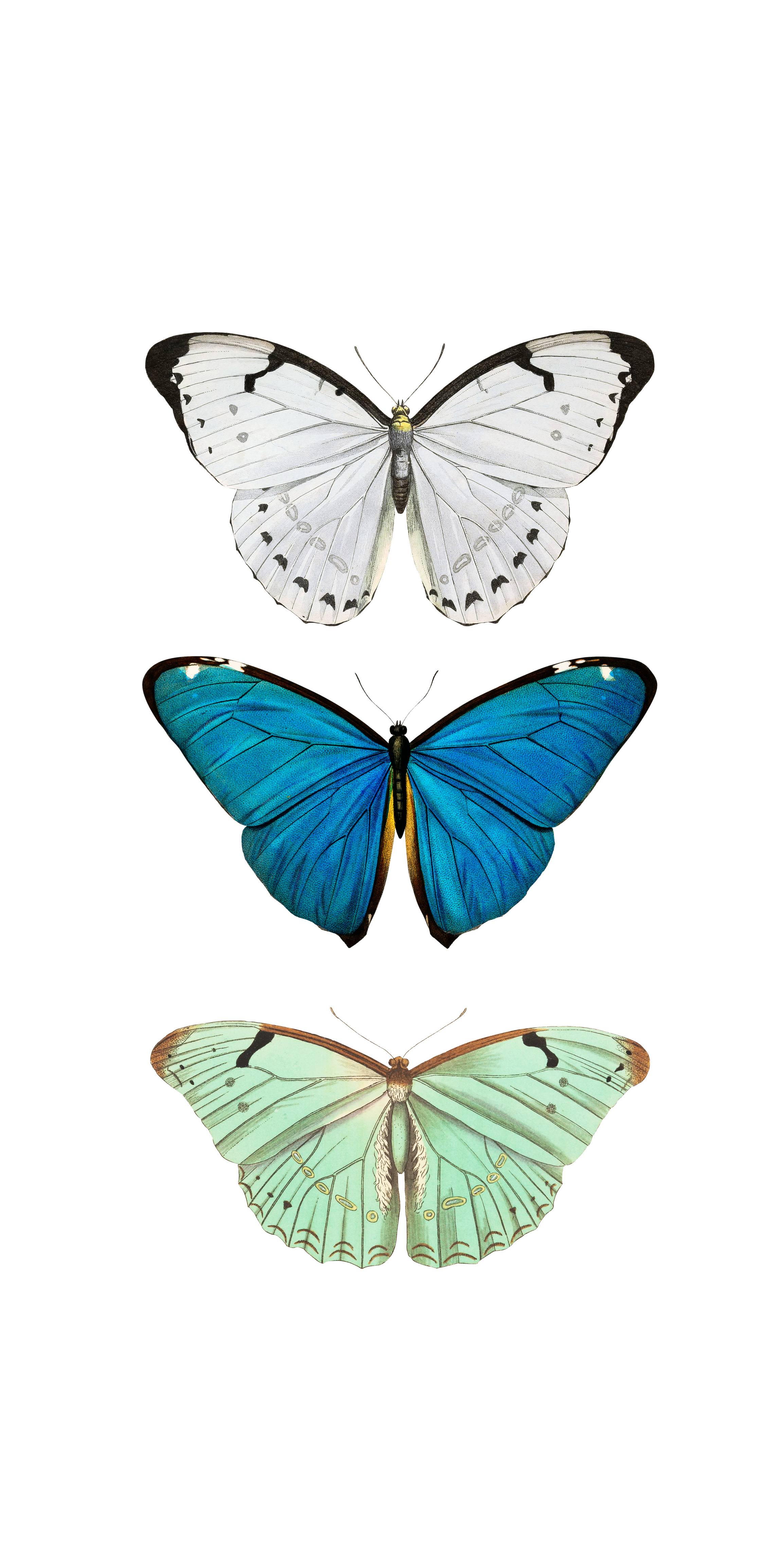 BUTTERFLY COLLECTION BLUE by MONIKA STRIGEL-